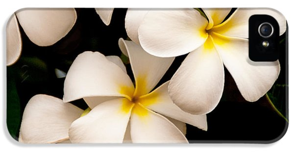 Scenic iPhone 5 Cases - Yellow and White Plumeria iPhone 5 Case by Brian Harig
