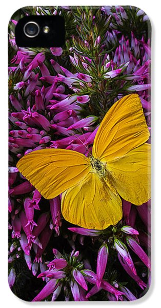 Softly iPhone 5 Cases - Yellow Butterfly On Italian Ventricosa iPhone 5 Case by Garry Gay