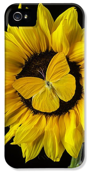 Softly iPhone 5 Cases - Yellow Butterfly On Sunflower iPhone 5 Case by Garry Gay