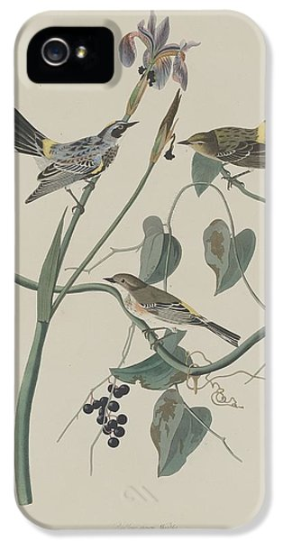 Yellow-crown Warbler IPhone 5 / 5s Case by John James Audubon