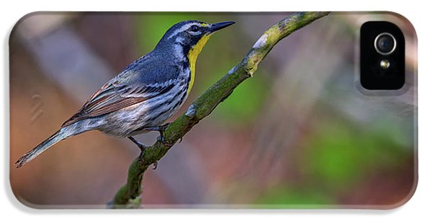 Yellow-throated Warbler IPhone 5 / 5s Case by Rick Berk