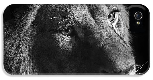 Young Lion In Black And White IPhone 5 / 5s Case by Lukas Holas