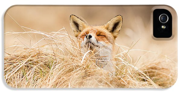 Zen Fox Series - Zen Fox 2.7 IPhone 5 / 5s Case by Roeselien Raimond
