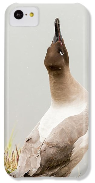 A Light Mantled Albatross IPhone 5c Case by Ashley Cooper