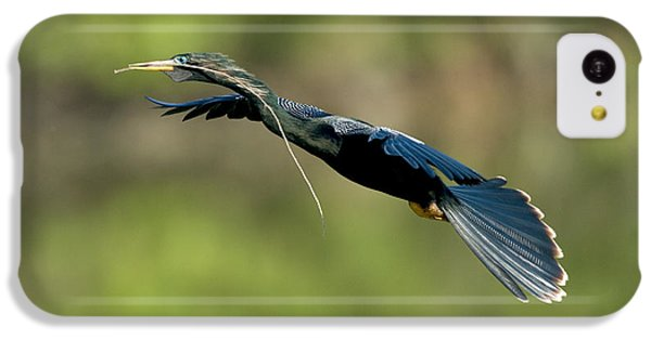 Anhinga IPhone 5c Case by Anthony Mercieca