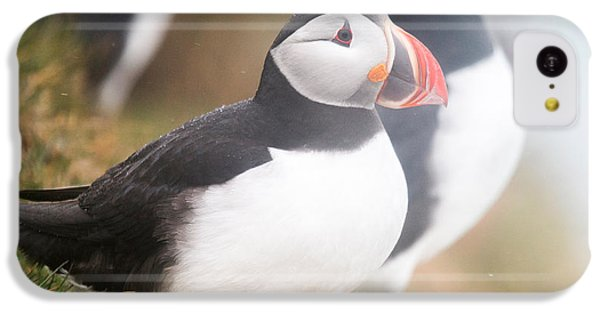 Atlantic Puffins Fratercula Arctica IPhone 5c Case by Panoramic Images