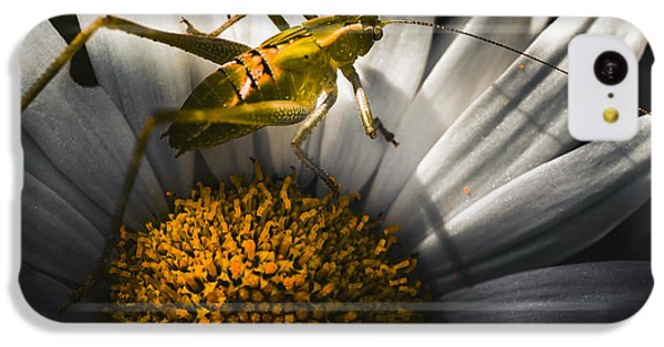 Australian Grasshopper On Flowers. Spring Concept IPhone 5c Case by Jorgo Photography - Wall Art Gallery
