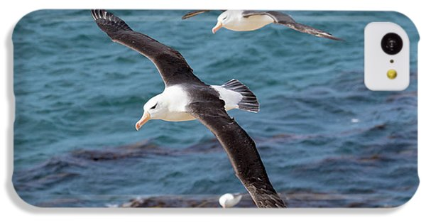 Black-browed Albatross (thalassarche IPhone 5c Case by Martin Zwick