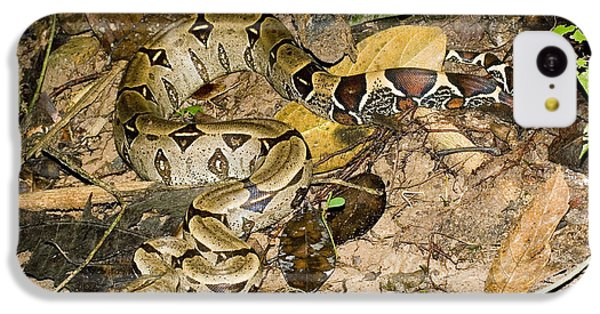 Boa Constrictor IPhone 5c Case by Gregory G. Dimijian, M.D.