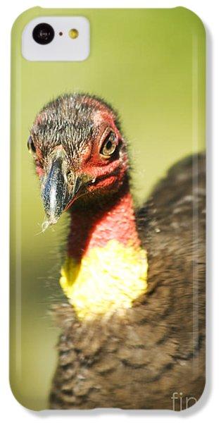 Brush Scrub Turkey IPhone 5c Case by Jorgo Photography - Wall Art Gallery