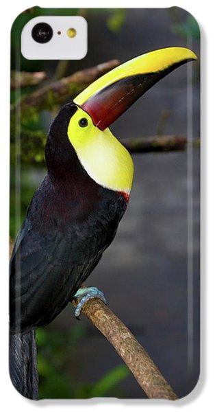 Chestnut-mandibled Toucan, Ramphastos IPhone 5c Case by Thomas Wiewandt