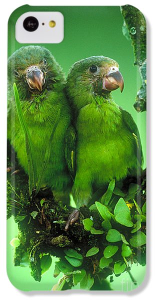 Cobalt-winged Parakeets IPhone 5c Case by Art Wolfe