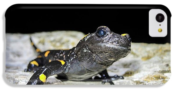 Fire Salamander (salamandra Salamandra) IPhone 5c Case by Photostock-israel