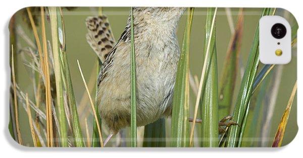 Grass Wren IPhone 5c Case by John Shaw