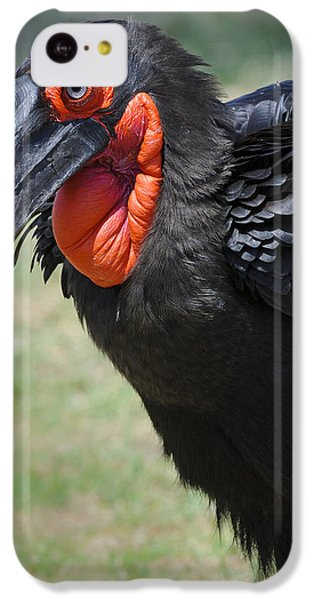 Ground Hornbill IPhone 5c Case by John Shaw