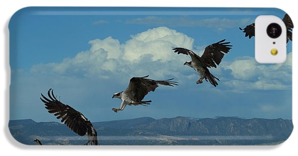 Landing Pattern Of The Osprey IPhone 5c Case by Ernie Echols