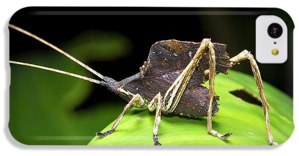 Leaf Mimic Bush-cricket IPhone 5c Case by Dr Morley Read