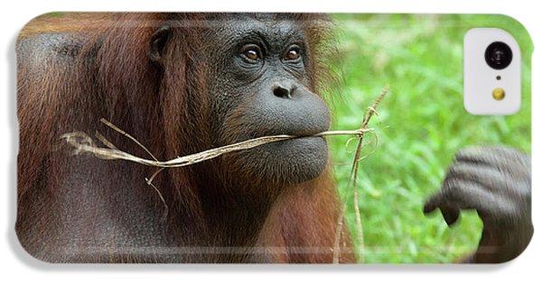 Malaysia, Borneo, Sabah, Kota Kinabalu IPhone 5c Case by Cindy Miller Hopkins