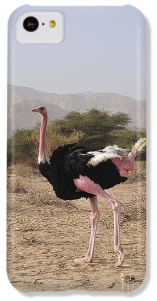 Ostrich In A Nature Reserve IPhone 5c Case by PhotoStock-Israel