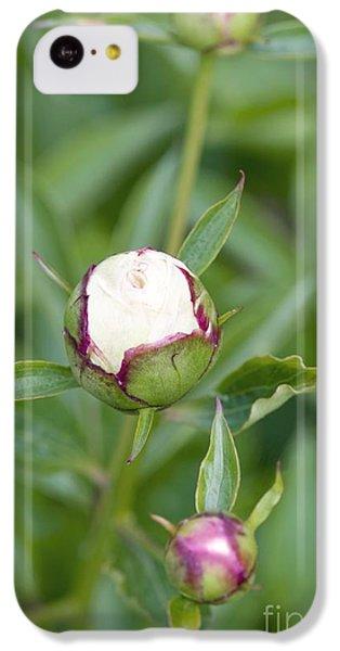 Paeonia Lactiflora Shirley Temple IPhone 5c Case by Jon Stokes