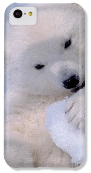 Polar Bear Cub IPhone 5c Case by Mark Newman