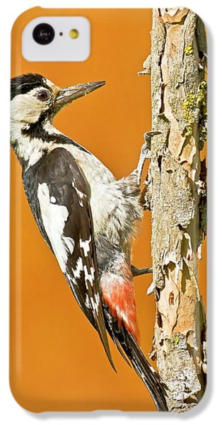 Syrian Woodpecker (dendrocopos Syriacus) IPhone 5c Case by Photostock-israel