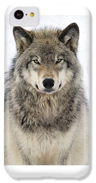Timber Wolf Portrait IPhone 5c Case by Tony Beck