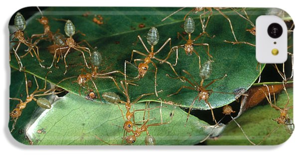 Weaver Ants IPhone 5c Case by Gregory G. Dimijian, M.D.