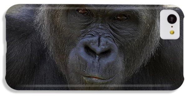 Western Lowland Gorilla Portrait IPhone 5c Case by San Diego Zoo