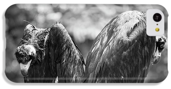 White-backed Vultures In The Rain IPhone 5c Case by Pan Xunbin