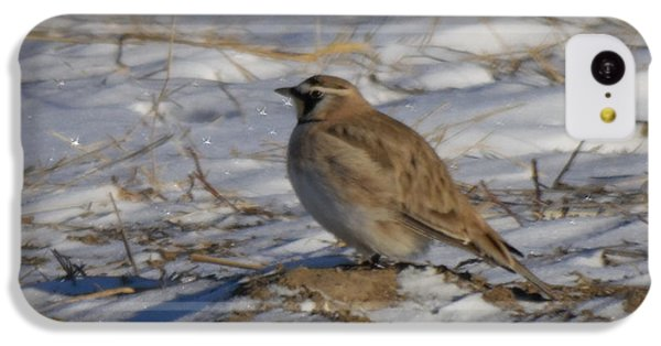 Winter Bird IPhone 5c Case by Jeff Swan