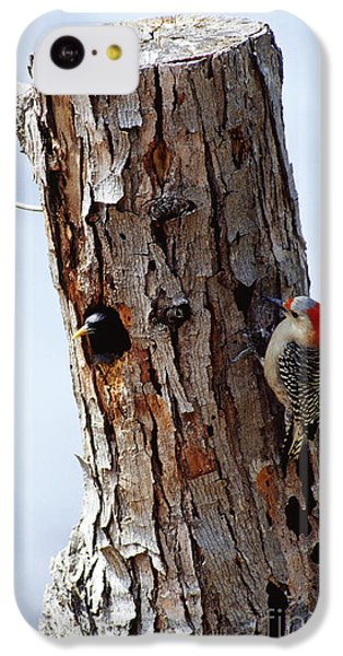 Woodpecker And Starling Fight For Nest IPhone 5c Case by Gregory G. Dimijian