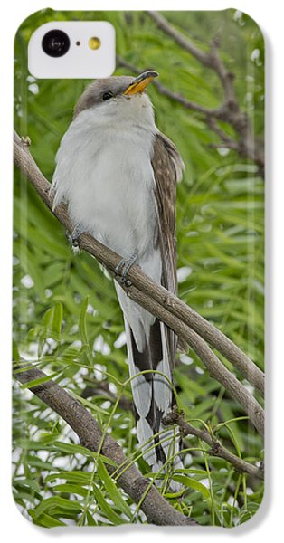 Yellow-billed Cuckoo IPhone 5c Case by Anthony Mercieca