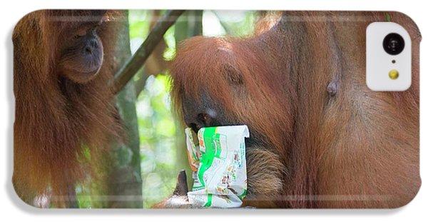 Sumatran Orangutan IPhone 5c Case by Scubazoo