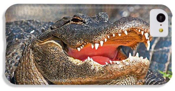 American Alligator IPhone 5c Case by Millard H. Sharp