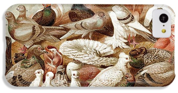 1870 Domestic Fancy Pigeon Breeds Darwin IPhone 5c Case by Paul D Stewart