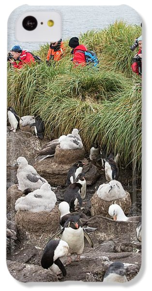 A Black Browed Albatross IPhone 5c Case by Ashley Cooper