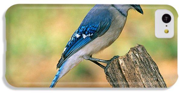 Blue Jay IPhone 5c Case by Millard H. Sharp