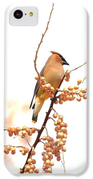 Cedar Wax Wing IPhone 5c Case by Floyd Tillery