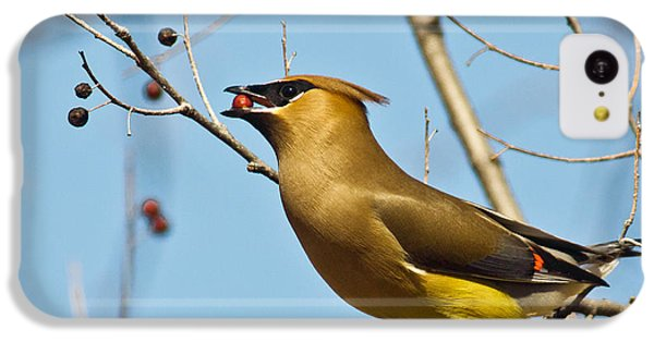 Cedar Waxwing With Berry IPhone 5c Case by Robert Frederick