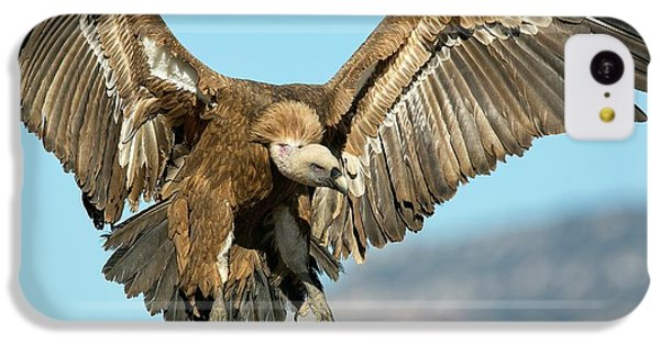Griffon Vulture Flying IPhone 5c Case by Nicolas Reusens