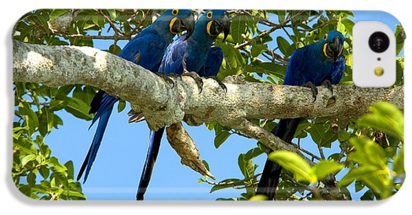 Hyacinth Macaws, Brazil IPhone 5c Case by Gregory G. Dimijian, M.D.