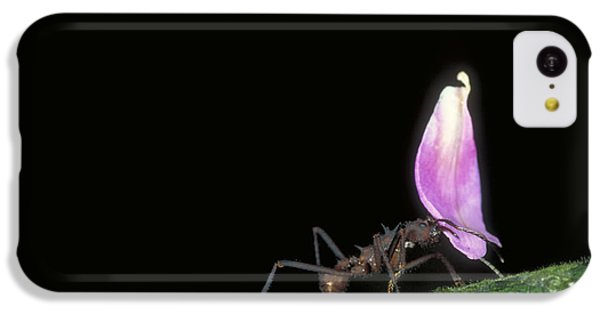 Leafcutter Ant IPhone 5c Case by Gregory G. Dimijian