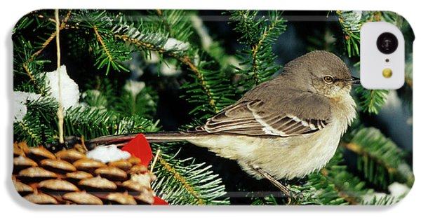 Northern Mockingbird (mimus Polyglottos IPhone 5c Case by Richard and Susan Day