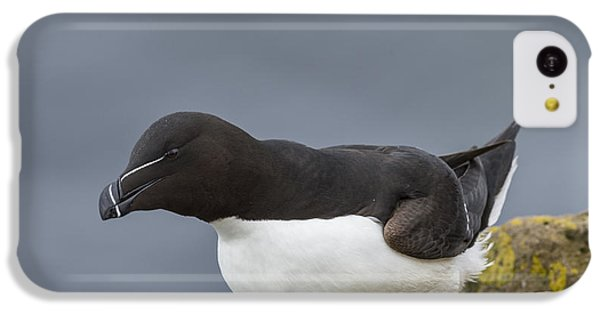 Razorbill IPhone 5c Case by John Shaw
