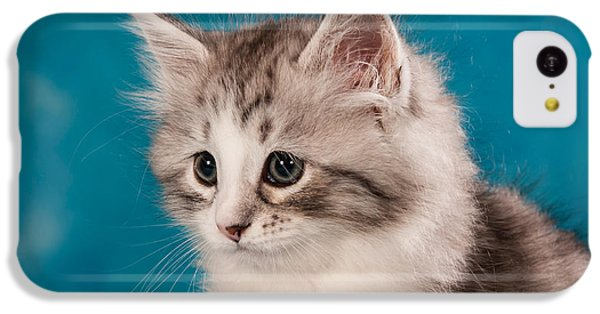 Sibirian Cat Kitten IPhone 5c Case by Doreen Zorn