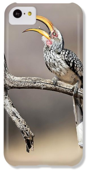 Southern Yellow-billed Hornbill IPhone 5c Case by Tony Camacho