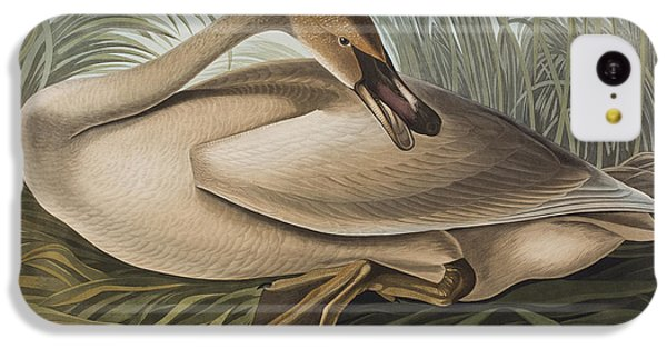 Trumpeter Swan IPhone 5c Case by John James Audubon