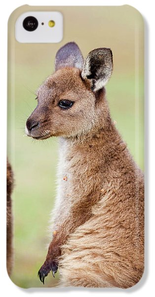 Western Grey Kangaroo (macropus IPhone 5c Case by Martin Zwick