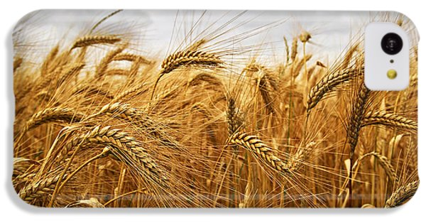 Wheat IPhone 5c Case by Elena Elisseeva